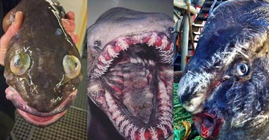 Este pescador publica las criaturas marinas más terroríficas de las profundidades
