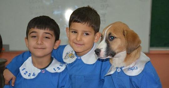 Tras ser rescatado por una escuela, perro callejero viste uniforme y asiste a clases