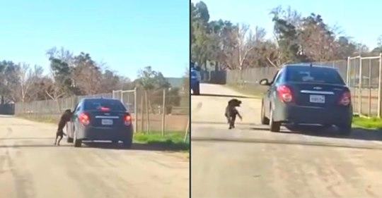 Un perro persigue desesperadamente a su dueño después de haber sido abandonado a un lado de la carretera