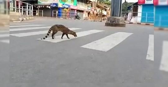 Reaparece un animal que se creía extinto durante la cuarentena en una ciudad de India