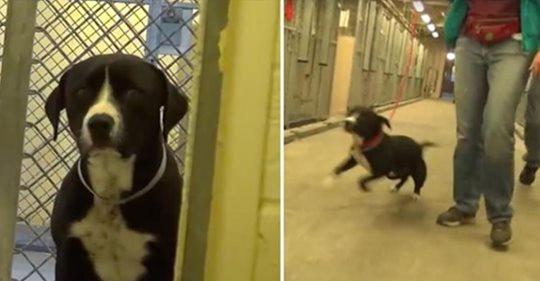 Perro de refugio se da cuenta de que está siendo adoptado y, literalmente, salta de alegría en un arrebato bien sentimental