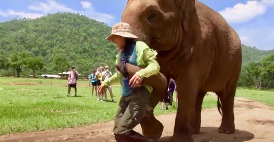 Mamá elefanta lleva a su cuidadora hasta una cría y le pide una nana
