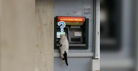 10 soluciones a preguntas típicas que se hacen los dueños de gatos