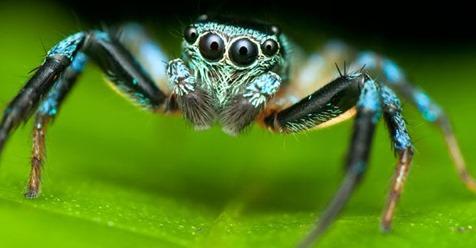 Curiosidades de las espeluznantes arañas