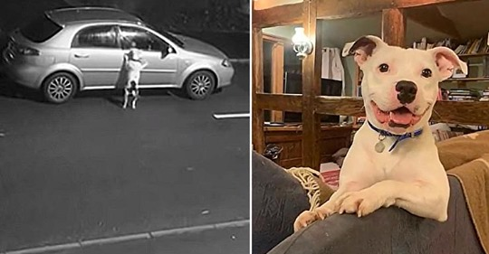 Su dueño lo grabó mientras lo abandonaba pero ahora es un perro muy feliz