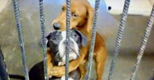 Una perra salvó a su mejor amiga horas antes de que la sacrificaran, mediante un simple abrazo