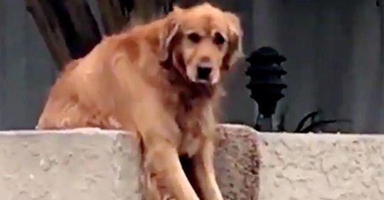 """Video: Perro pone una linda """"trampa"""" a transeúntes"""