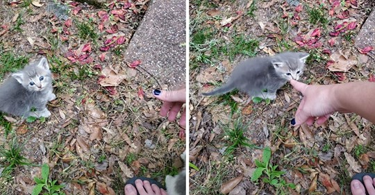 Una gata callejera lleva a una mujer a conocer a sus gatitos recién nacidos