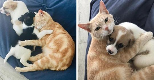 La gata está devastada después de perder sus gatitos hasta que encuentra una camada de cachorros para cuidar