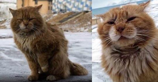 Gata vive en ciudad donde la muerte y los gatos están prohibidos