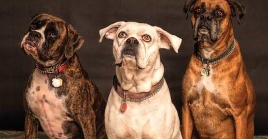 Principales problemas de oído que puede tener su perro.