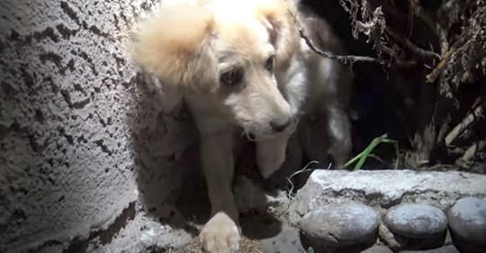 Se encuentra un cachorro con microchip en los arbustos después de que su dueña ya no lo quería más
