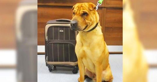 Dueña abandona a su perro en una estación de tren