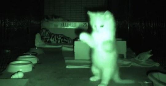 Un hombre pone una cámara para observar a unos gatitos en la noche y se ríe con el video