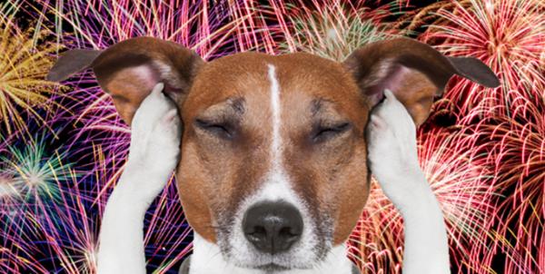 El perro tiene miedo a los fuegos artificiales: ¿Por qué y qué hacer?