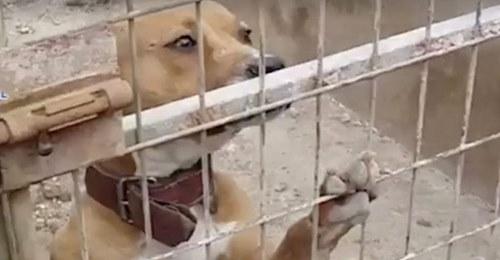 Desarticulada una banda con 230 perros para hacer peleas