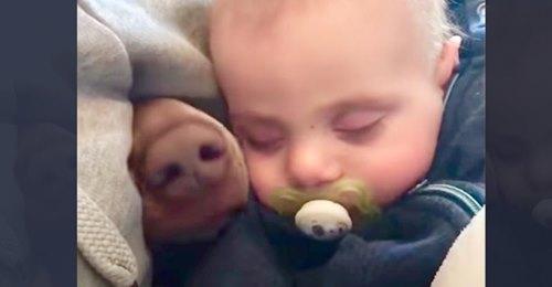 Mamá graba a su bebé durmiendo, pero un hocico peludo aparece a su lado