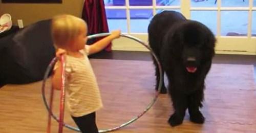 Niña pequeña le muestra a su perro cómo jugar al hula hula, los movimientos del perro tienen a todos perdiendo la cabeza