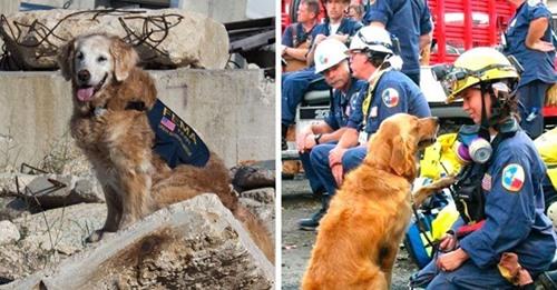Muere el último héroe canino que participó en los rescates del 11 S