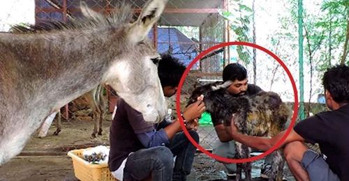 Curan a un burro herido y su madre reacciona de la forma más tierna