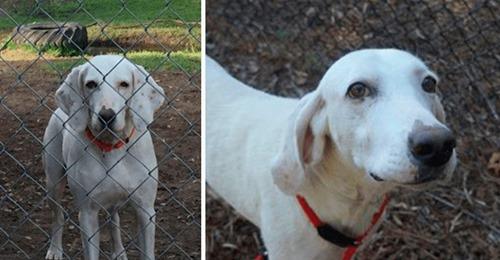 Un perro vuelve una y otra vez al refugio que lo acogió y ¿por qué razón?