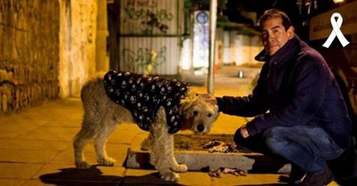 El mundo llora la muerte del ángel que en las noches abrigaba y alimentaba perritos callejeros