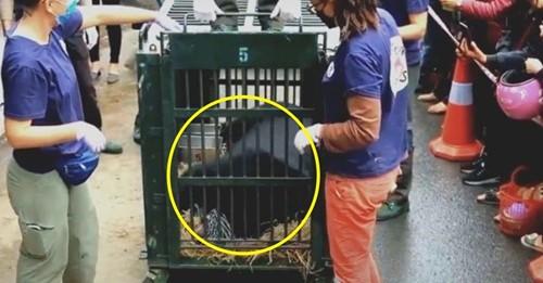 Los osos que sobrevivieron 17 años encerrados sin ver la luz del sol finalmente son rescatados