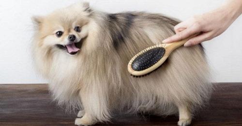 ¿Cómo cepillar a un perro y con qué frecuencia?