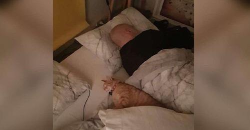 Un gato se escabulle en la casa de sus vecinos todas las noches para pasar a dormir con su amigo