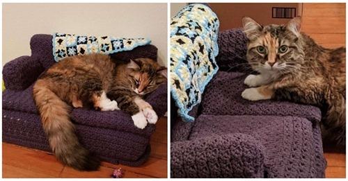 Una gatita no se separa del sofá a ganchillo que le tejió la abuela