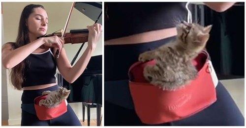 Gatita se queda quietita en la riñonera de su dueña para que ella pueda practicar violín