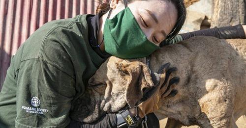 Salvan de la muerte a decenas de peluditos a pocos días del Festival de carne de perro 2021