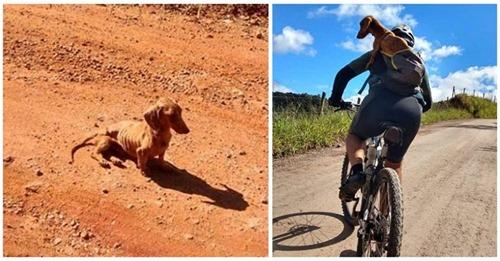 Ciclistas ven un perrito abandonado que era solo piel y huesos y saben que se lo llevarán a casa