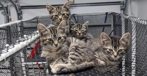 Sus 4 gatitos rescatados intentar huir de casa y terminan atrapados sobre una red