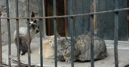Condenada una pareja de ancianos por envenenar con bolitas de carne a ocho gatos de su vecina