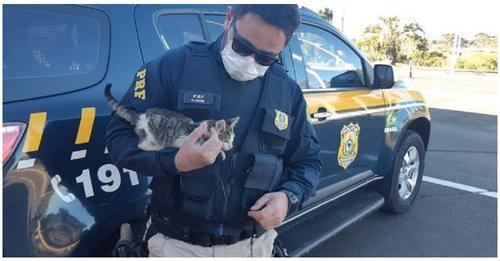 Un hombre arroja a un gato desde la ventana de su auto y un policía corre a salvarlo
