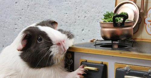 Denia ya tiene sus restaurantes con menú para mascotas