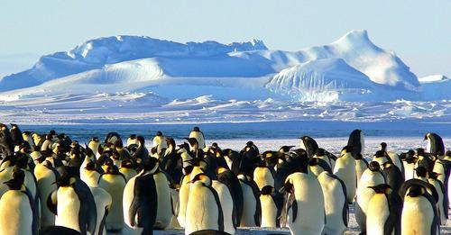 Encuentran microplásticos en la dieta de los pingüinos de la Antártida