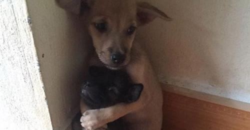 Estos dos cachorros no han dejado de abrazarse hasta que han sido rescatados