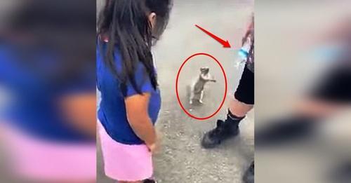 Graban cómo una tierna ardilla sedienta suplica ayuda a un niño que tenía una botella de agua