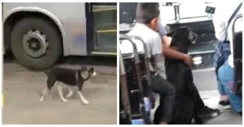 Niños le piden a un chófer que se detenga para subir a su perrito que venía persiguiendo al bus