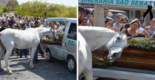 Un caballo acude al funeral de su mejor amigo humano para rendirle un tributo póstumo