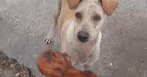 Joven alimenta una perrita que mendigaba comida, ella sale corriendo y él decide seguirla