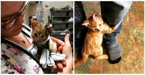 Gatito callejero que fue rescatado del fuego no deja marchar al hombre que escogió como amigo