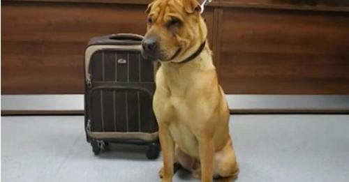 Un triste perrito es encontrado solo en una estación de tren atado a una maleta llena con sus juguetes favoritos