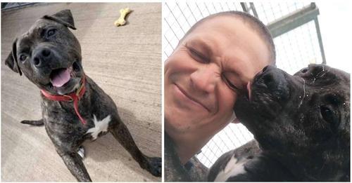 Un perrito de un refugio vio cómo adoptaron a 221 perros y él esperó durante 2 años un hogar
