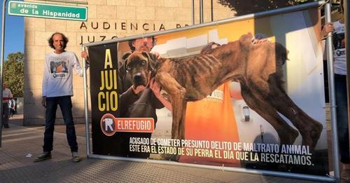 El Refugio asegura que la ley de Bienestar animal permitirá seguir sacrificando: 'Solo bastaba copiar a Madrid'