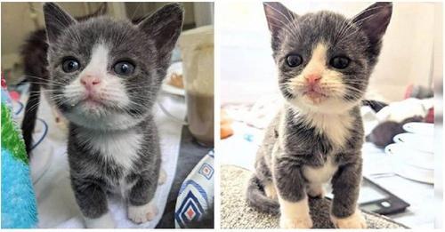 Un diminuto gatito de la mitad de su peso se aferra a la vida y escribe su propia historia feliz