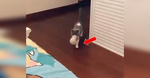 Madre gata primeriza entra a la habitación de su dueña con su bebé en el hocico